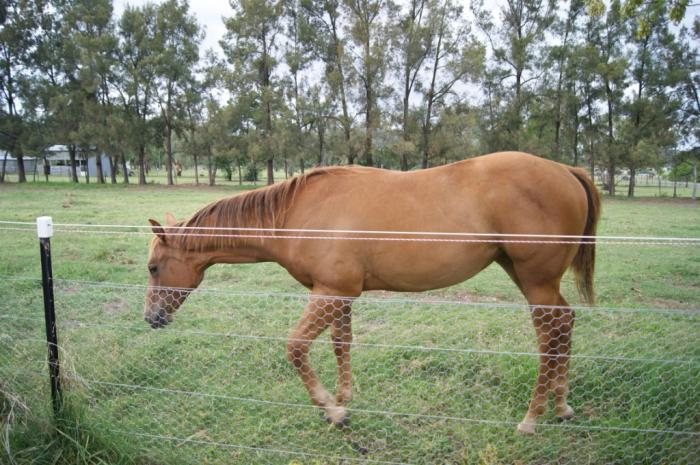 YEARLING FILLY IMPORTED BLOODLINES