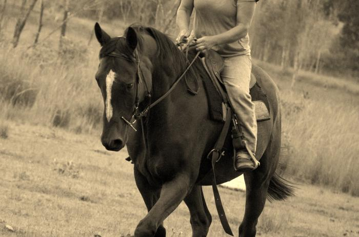 Gorgeous solid Wb x Qh. Ready for anything.