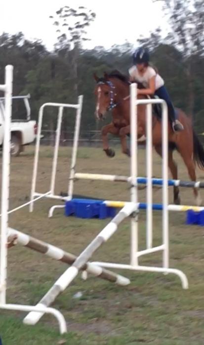 Fantastic all round pony