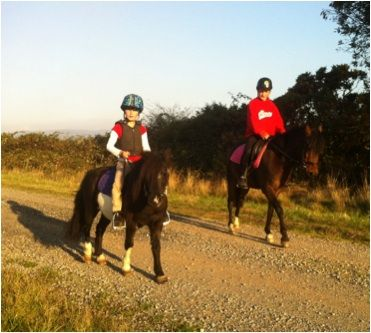 Bandi 9hh Pinto Shetland Pony Mare for sale