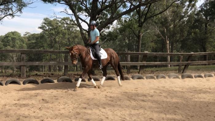 Sport Horse Mare
