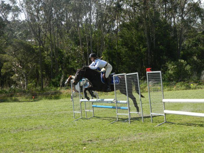 Quality Riding Pony