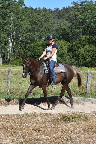 Urgent sale: Talented stock horse gelding