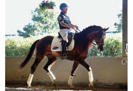 Questing R Service Fee - Young Dressage