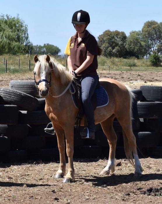 Stunning Palomino Welsh B started under saddle