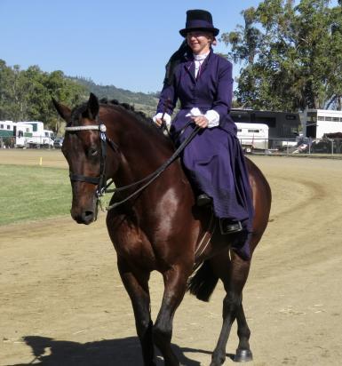 Side-Saddle Grand Parade Marburg Show