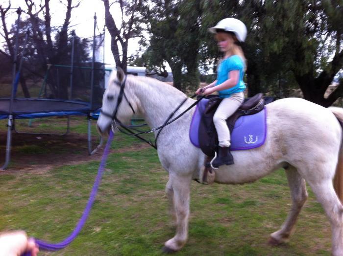 Great  pony