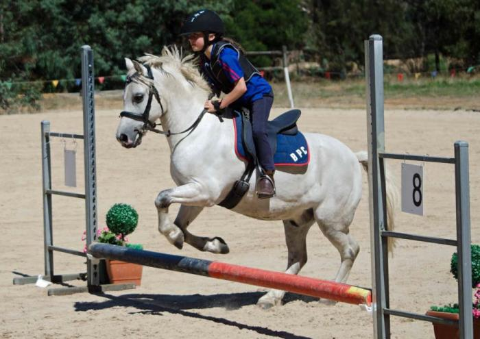 Experienced pony club mount for novice rider
