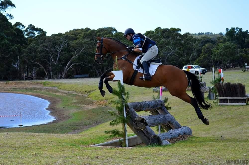 Jump or Pleasure Horse