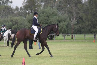 Chev horse sports