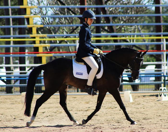 Perfect dressage pony