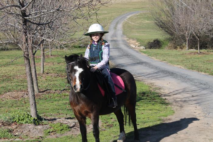 Welsh Beginner Pony