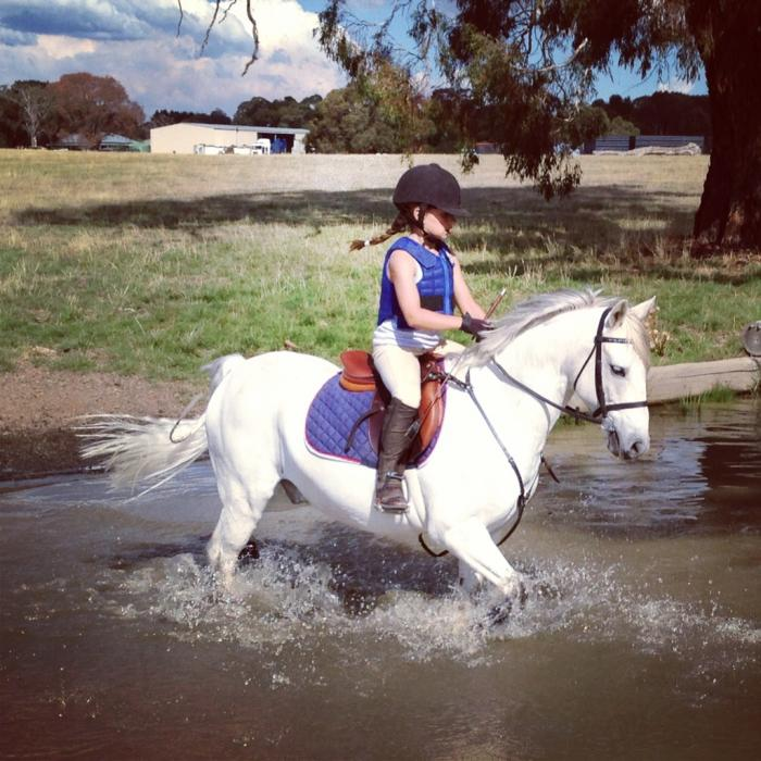 Mother's Dream Awesome All Rounder Pony 12.2hh