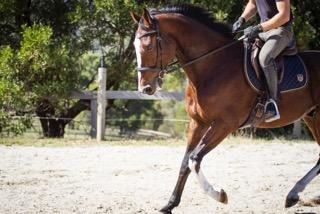 His canter transitions are established