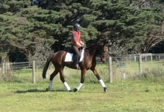 Very quiet and willing dressage bred youngster
