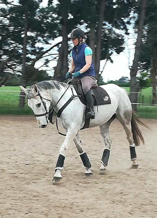 MUST SEE Irish Sport Horse mare - simply lovely!