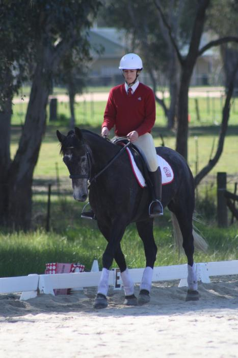 Beautiful and talented Performance Gelding