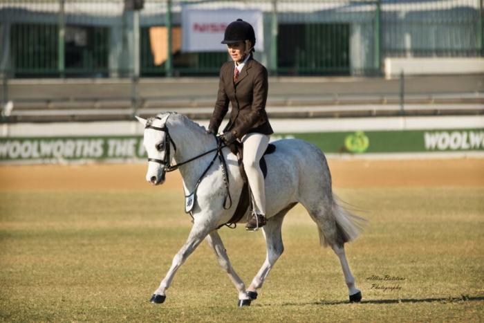 ARCADIAN SPIRIT superstar small pony