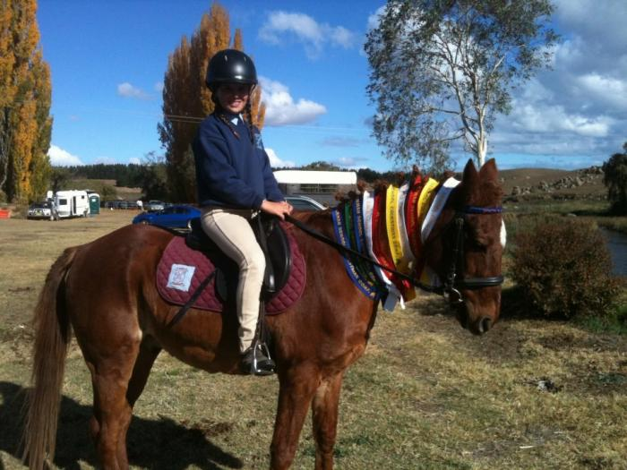 Reliable Pony Club Mount