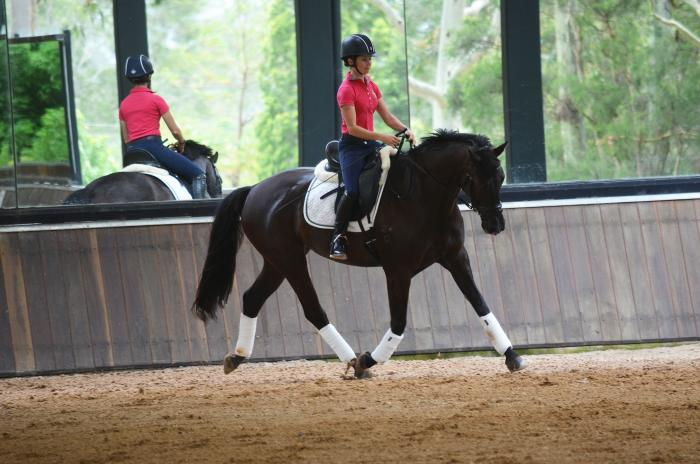 Gorgeous Young Fiji R Dressage Mare