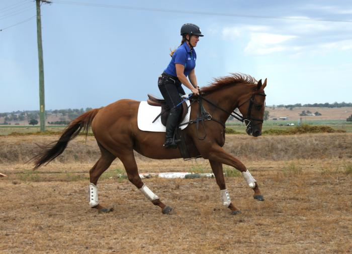 Talented Eventer - movement, jump and rideability