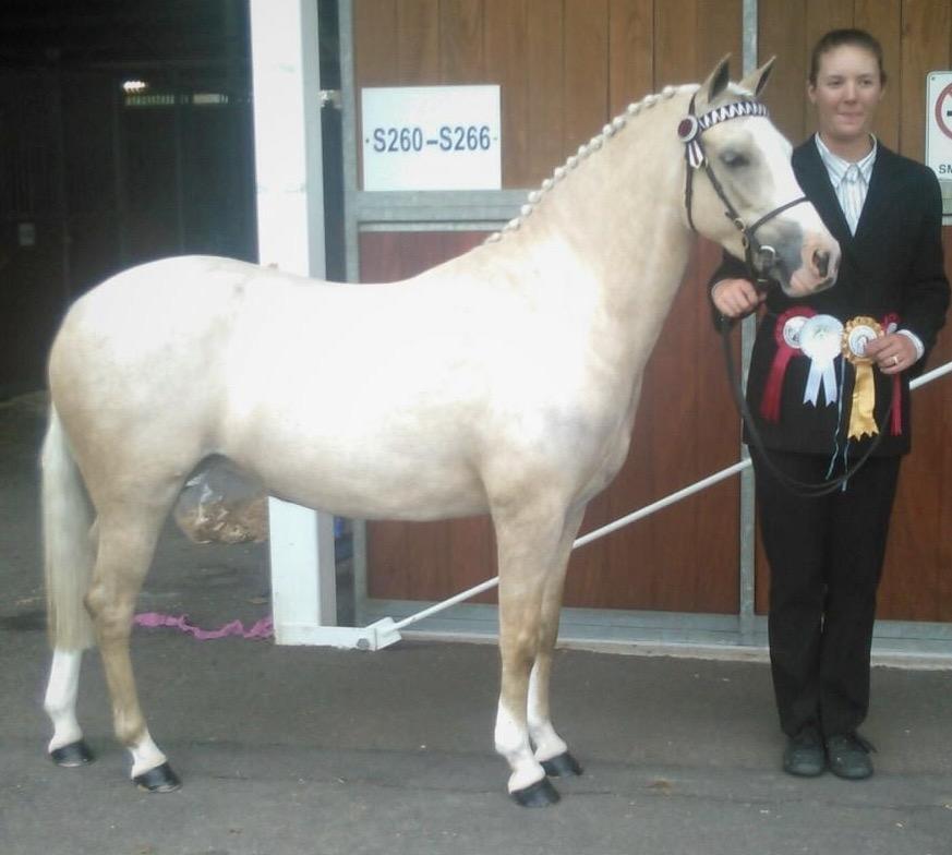 Ranni Park Pony Stud