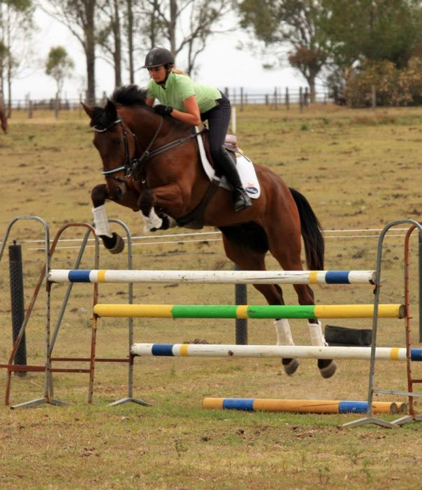 Super young dressage/eventer for sale.