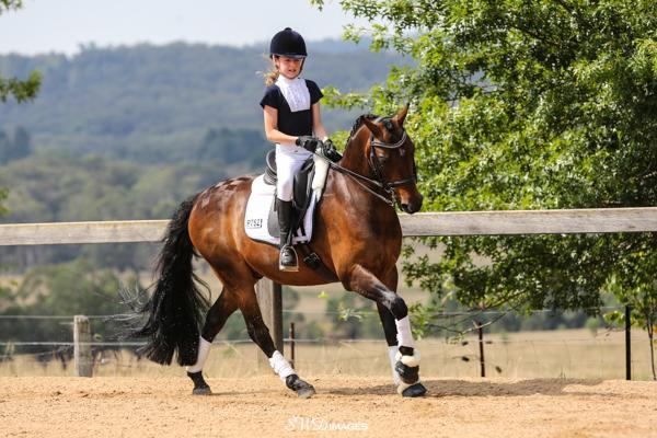 Exceptional FEI Dressage Pony