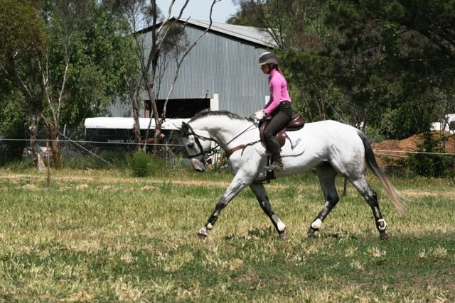 Ideal Young Rider Horse