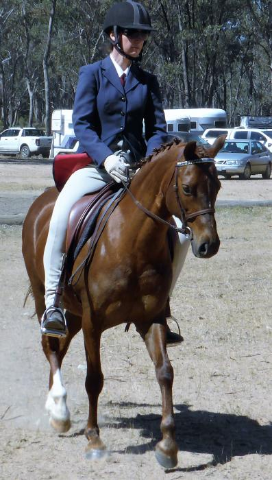 Lovely Part Welsh/Riding Pony 13hh Mare