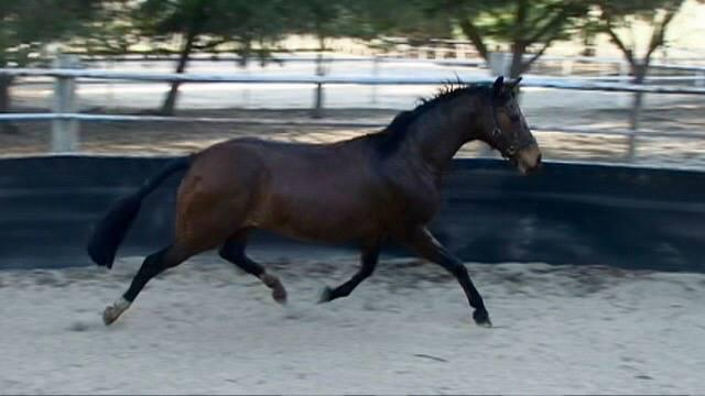 Stud Clearance Broodmares- what a stride!!!