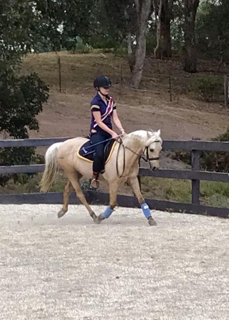 Quiet Allrounder/Performace Pony