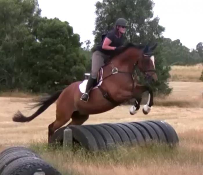 Performance Horses