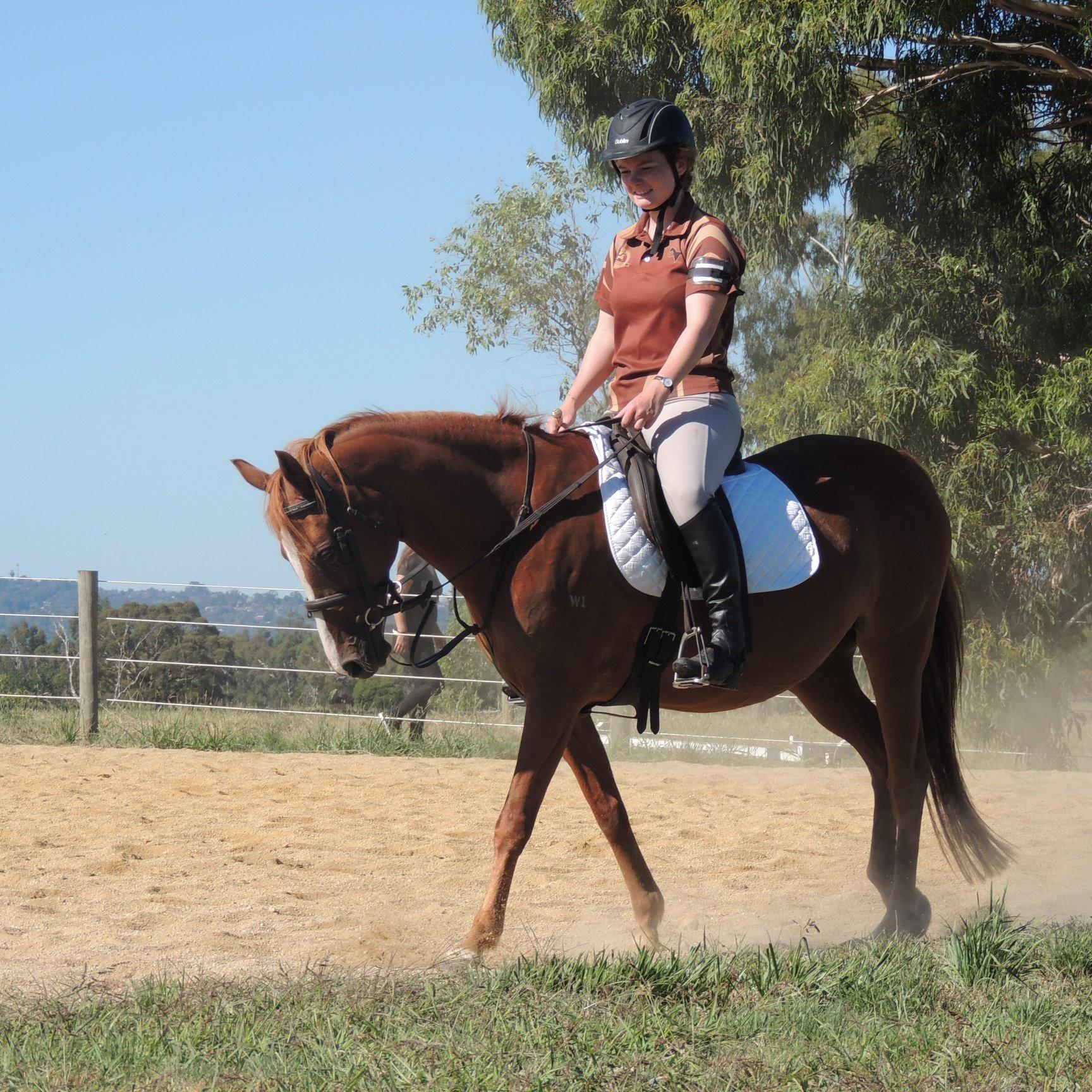 14hh Chestnut Riding Pony Mare