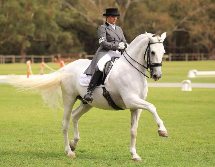 Safe Schoolmaster to learn the FEI movements