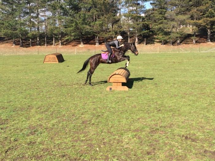 Perfect Adult or Childs Eventer/Allrounder