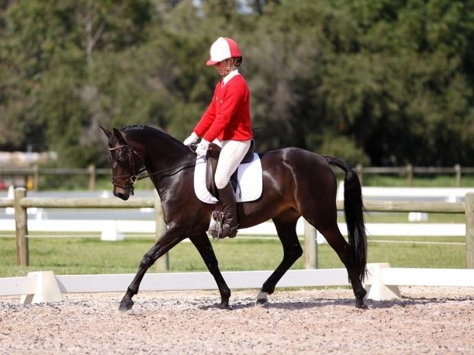 Talented Dressage Pony.    SOLD