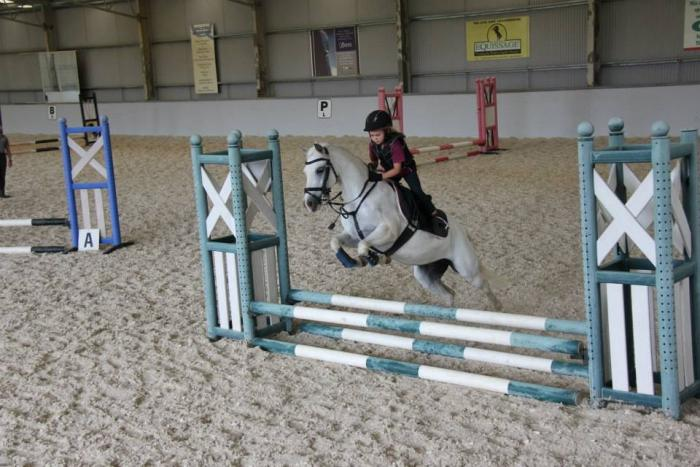 Quality Reliable Beginners School Master Pony