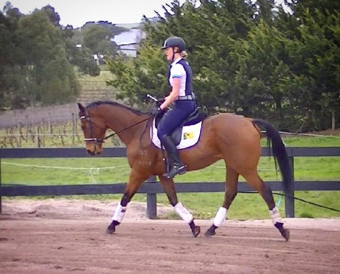 Dressage, show horse and allrounder prospect.