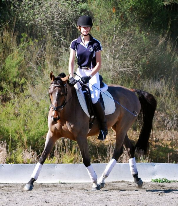 Top quality, super educated Dressage Pony,
