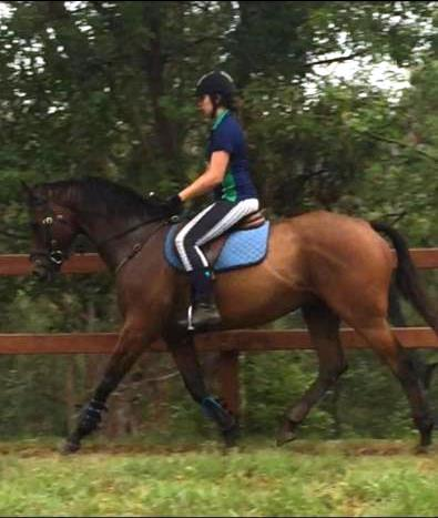 SHOWHORSE/INTERSCHOOL/PONY CLUB/EVENTING