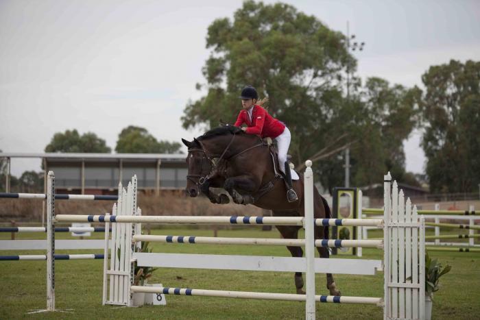 competitive miniprix/youngrider horse