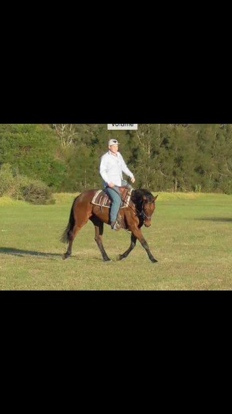 GLAMOROUS MARE   VIDEO