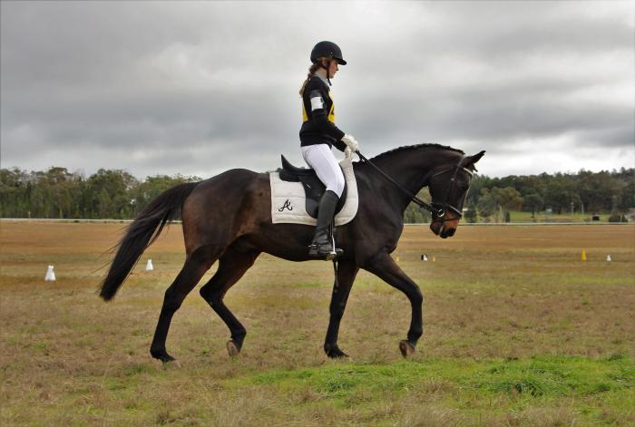 Kind, Easy and Fun Gelding