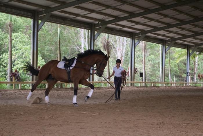 Dutch Warmblood Dressage horse