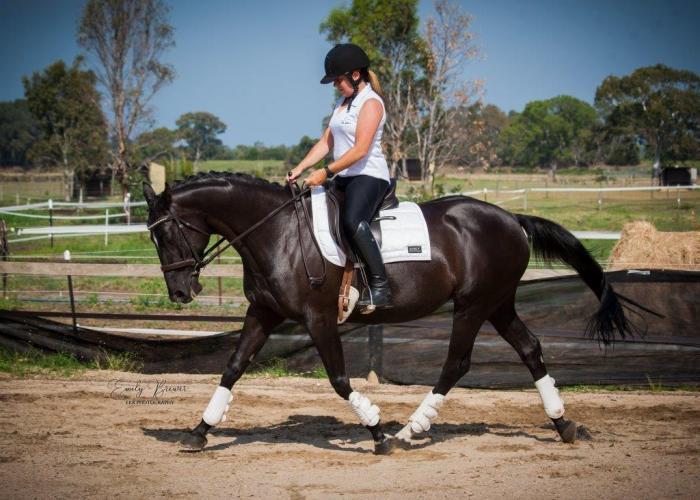 stunning ASH mare 15hh 10 yr