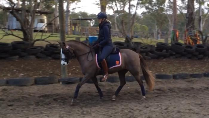 Experienced Competitive Pony Club Allrounder