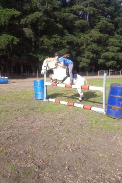 Beginners dream pony