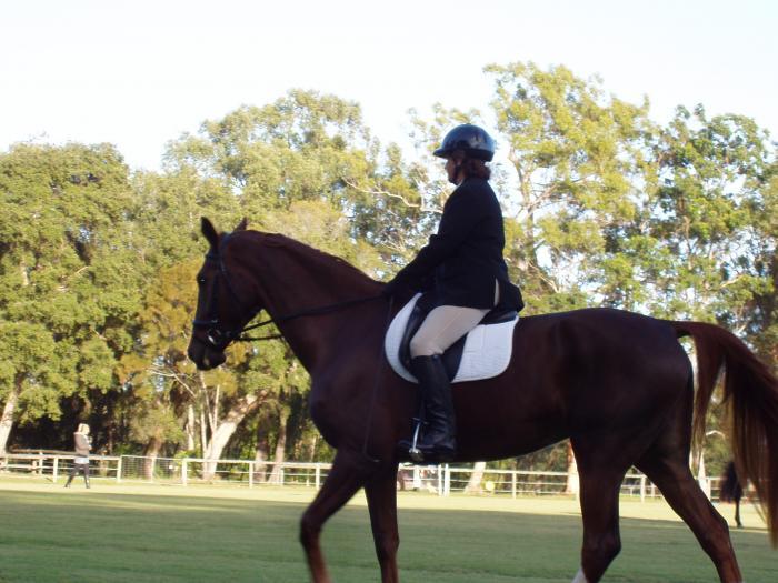 Beautiful  Warmblood dressage mare 17.1h.h.