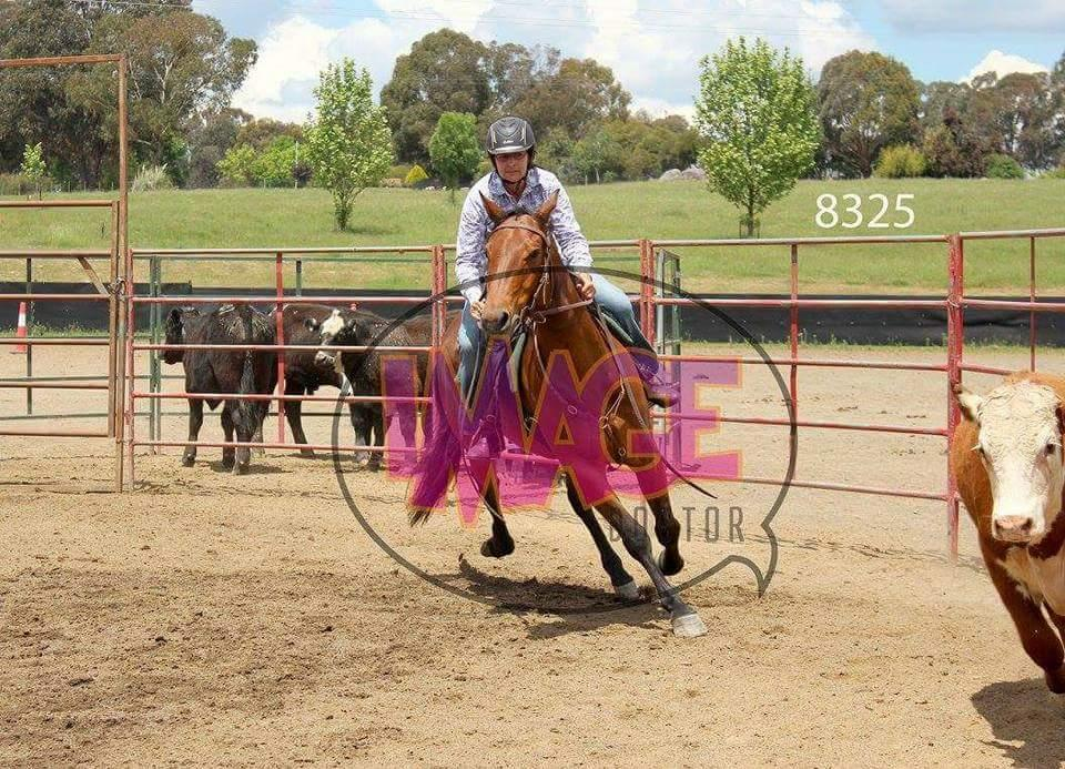 Reg Quarter horse